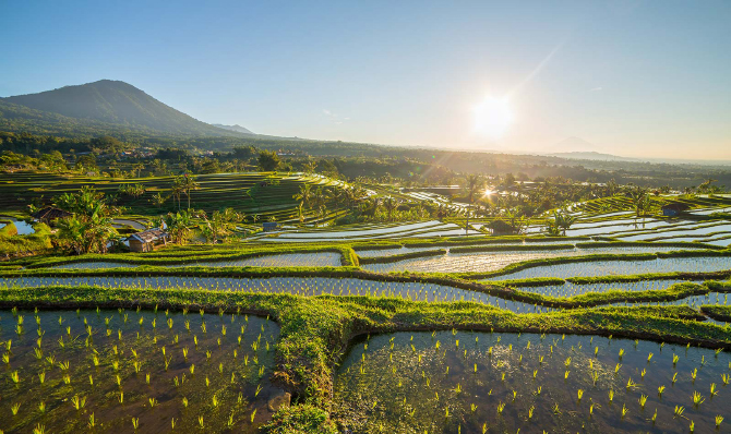 Everything You Need To Know Jatiluwih Rice Terraces in Bali